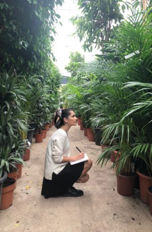 cocodema-bitki-plant-kokadema-yesil-cicek-tasarim-terrarium-succulent-sukulent-sibel-gurcuoglu-1