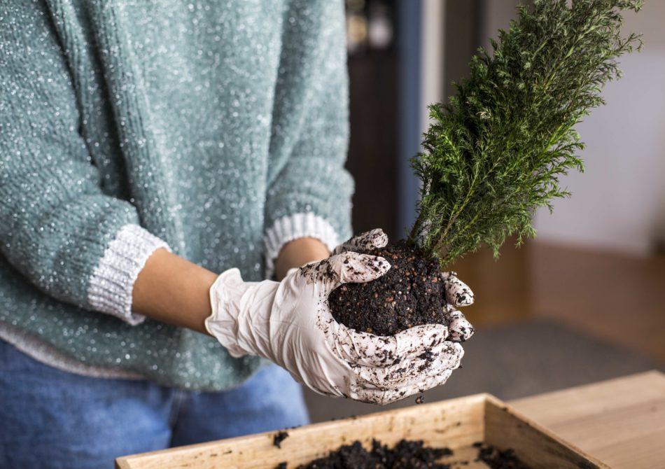 cocodema-bitki-plant-kokadema-yesil-cicek-tasarim-terrarium-succulent-sukulent-workshop-atolye-1