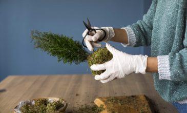 cocodema-bitki-plant-kokadema-yesil-cicek-tasarim-terrarium-succulent-sukulent-workshop-atolye-2