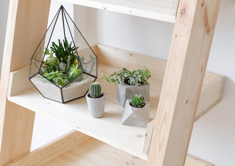 cocodema-bitki-plant-kokadema-yesil-cicek-tasarim-terrarium-succulent-sukulent-workshop-atolye-3