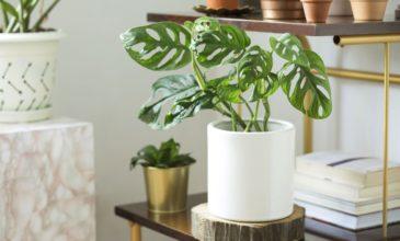 cocodema-bitki-plant-kokadema-yesil-cicek-tasarim-terrarium-succulent-sukulent-workshop-atolye-4