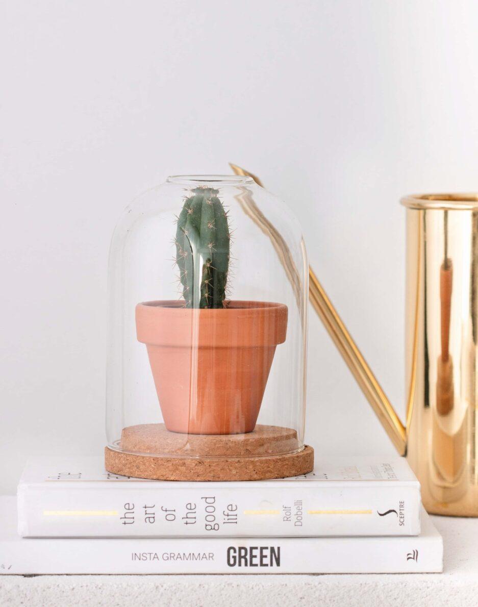 Kaktüs Teraryum Terrarium