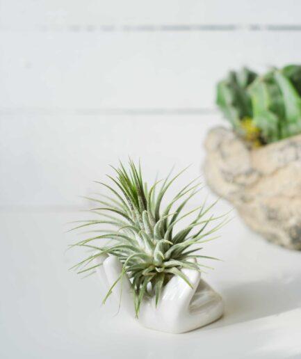Ceramic Hand & Airplant (Hava Bitkisi)