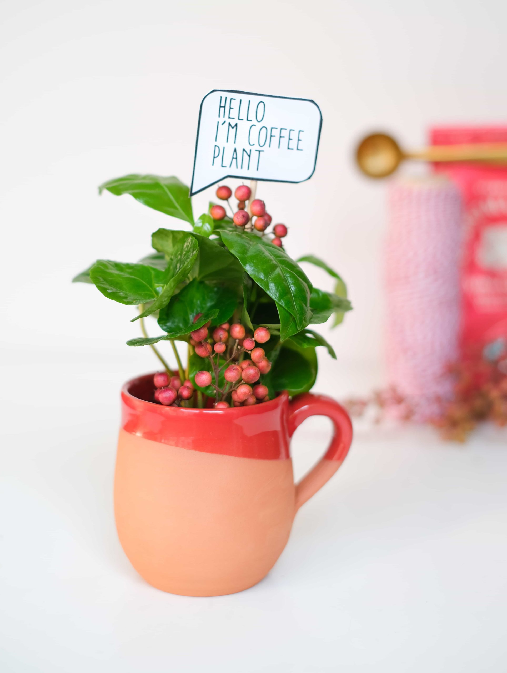 Coffea Arabica Kahve Bitkisi Coffee plant Mug