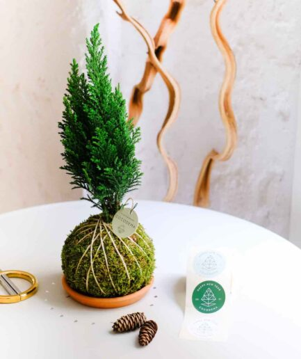 Pine Cocodema Çam Kokedama