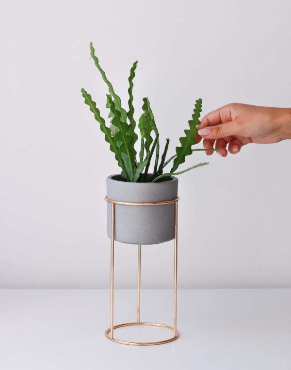 pirinç ayaklı bitki saksısı gri