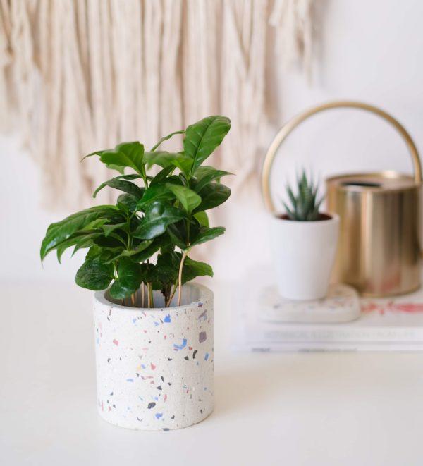 beyaz terrazzo saksı planter