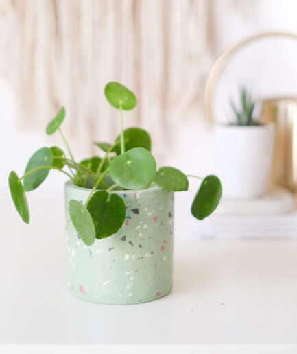 yeşil terrazzo saksı planter