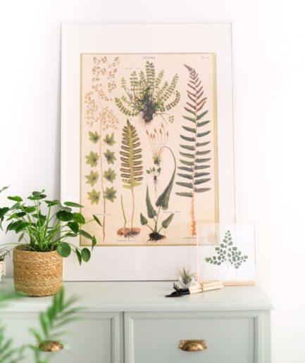 Vintage Bitki Posteri Ferns Eğrelti Otları
