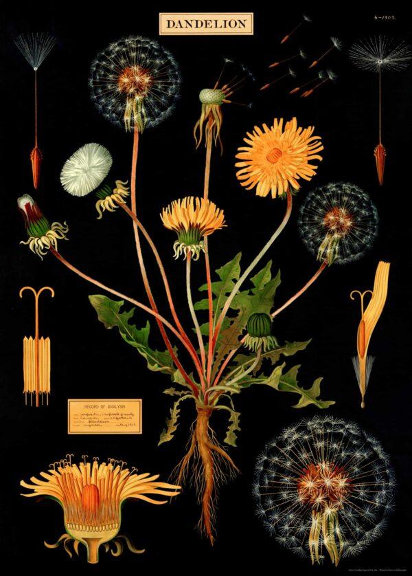 Dandelion Flower Vintage Poster Karahindiba
