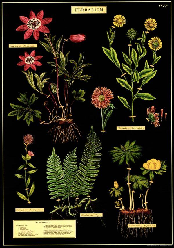 Herbarium vintage poster