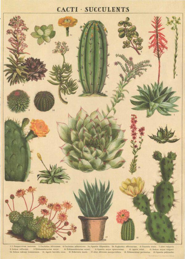 cacti and succulents kaktüs ve sukulentler poster