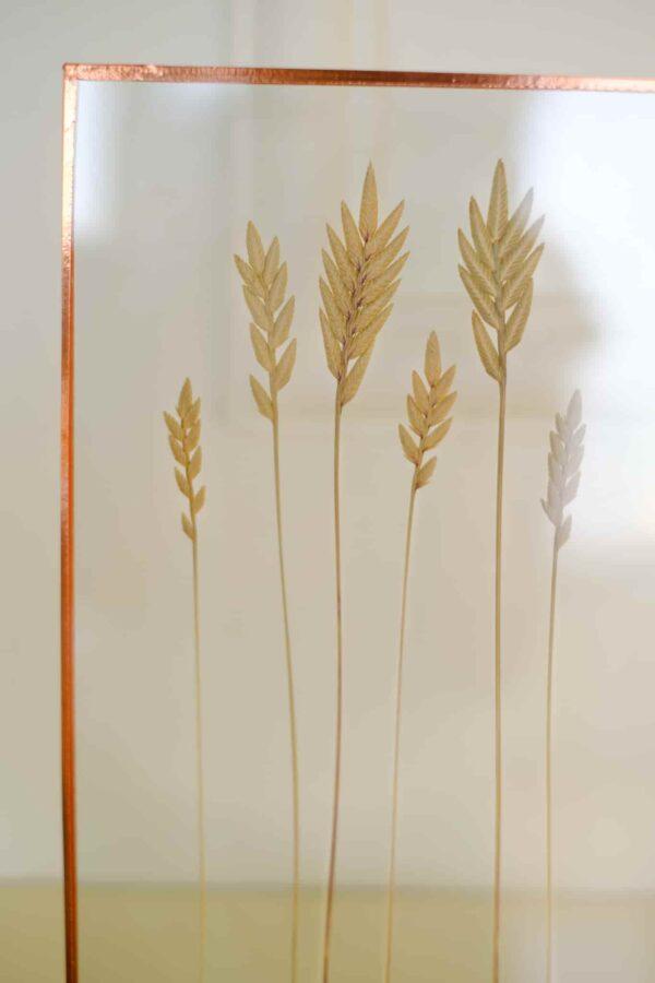 Lovegrass Spiga Salkım Yulaf Eragrostis Copper Bakır Çerçeve