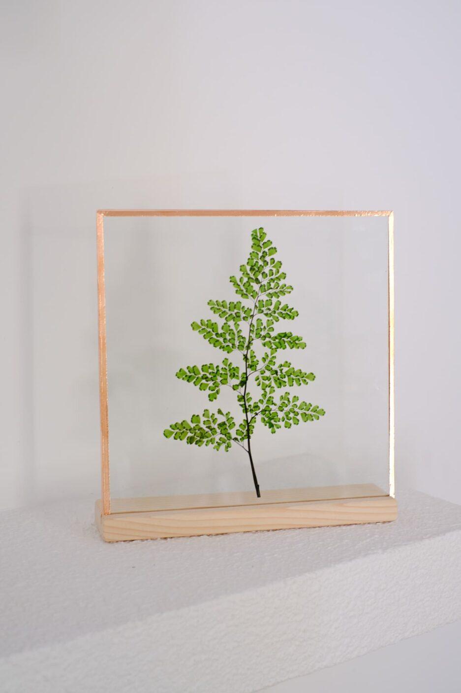 yeşil maiden hair fern çerçeve frame