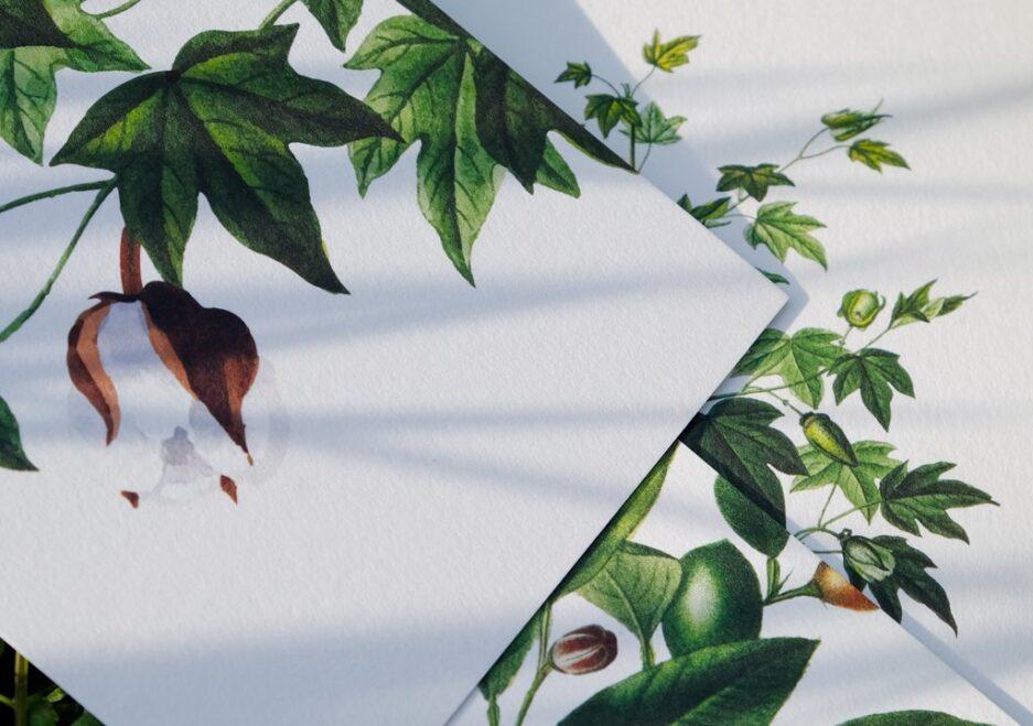 Gossypium Barbadense (Pamuk) çizgisiz dikişli defter
