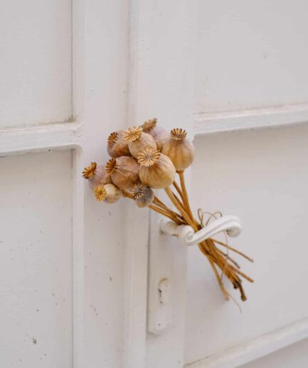 Haşhaş Demeti (Papaver somniferum)