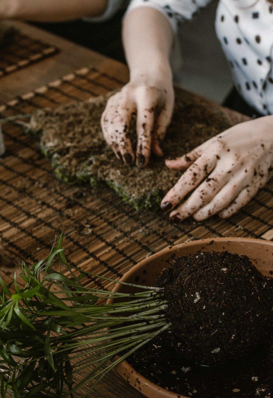 iç mekan bitki bakımı ve kokedama atölyesi cocodema