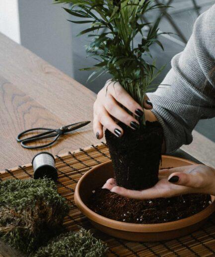 iç mekan bitki bakımı ve kokedama atölyesi